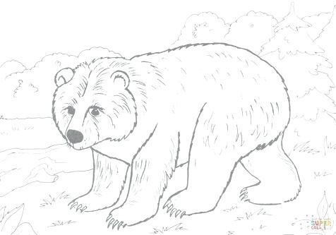 476x333 Black Bear Coloring Pages Black Bear Coloring Brown Page Pages