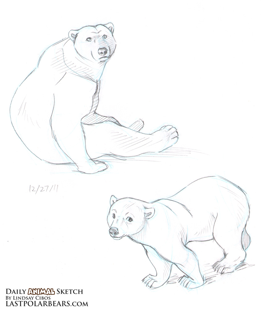 843x1000 Daily Animal Sketch Grizzly And Polar Bears Last Of The Polar