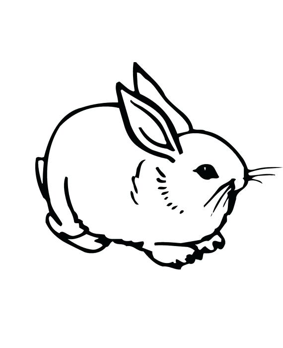 570x700 Pretty Bunny Coloring Page Best Of Drawn Cottontail Rabbit Pencil