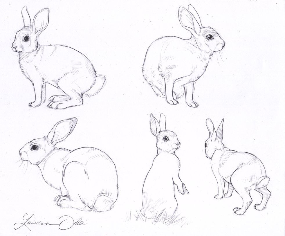 982x813 Rabbit Drawings