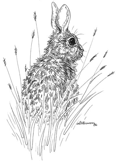 400x554 Rabbit Sketch