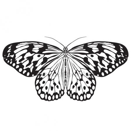 450x450 Detailed Realistic Sketch Of A Butterfly Stock Vector