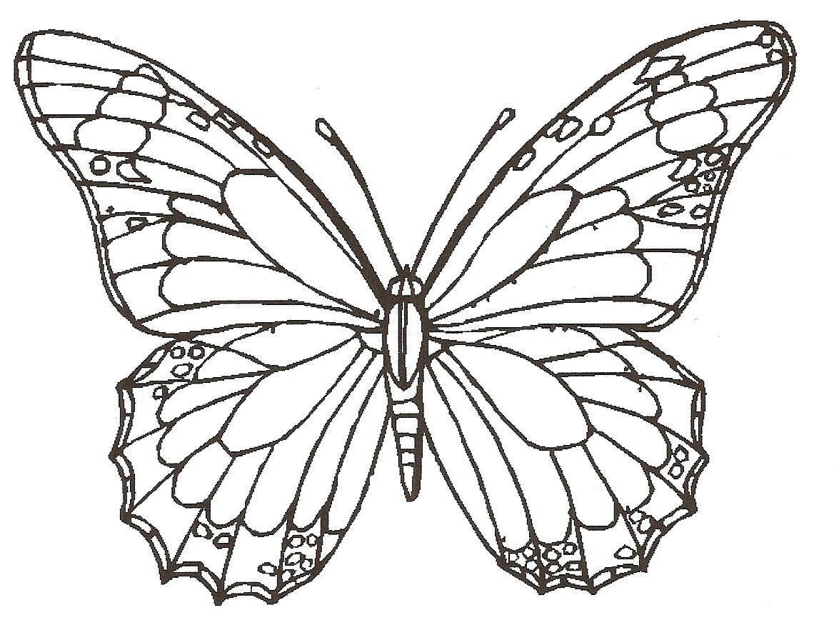 Realistic Butterfly Drawing at GetDrawings.com | Free for personal ...