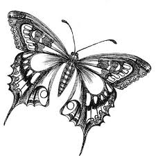 225x225 Image Result For How To Draw Realistic Butterflies Art