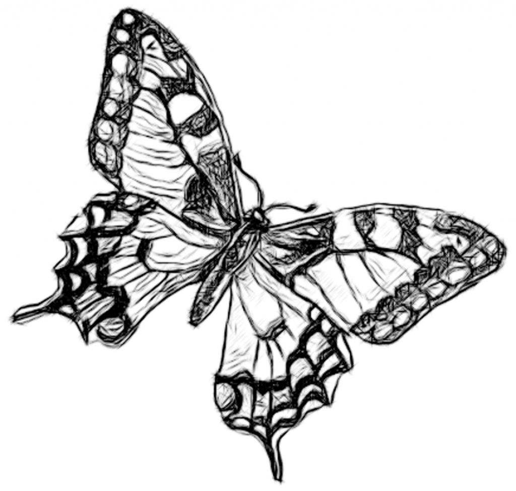 1024x975 Pencil Sketches Of Butterflies How To Draw A Realistic Butterfly