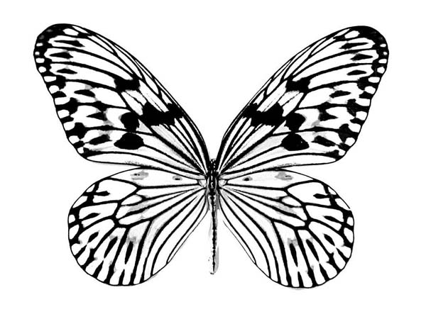 600x450 Realistic Butterfly Drawing Coloring Page