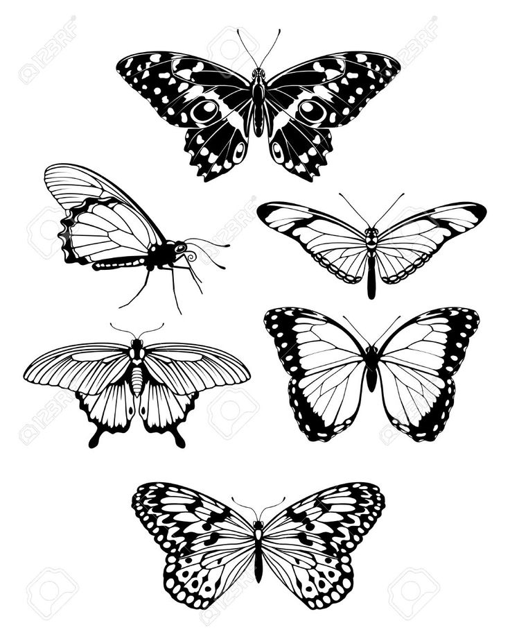 736x921 20 Best Small Butterfly Tattoo Outline Drawing Images