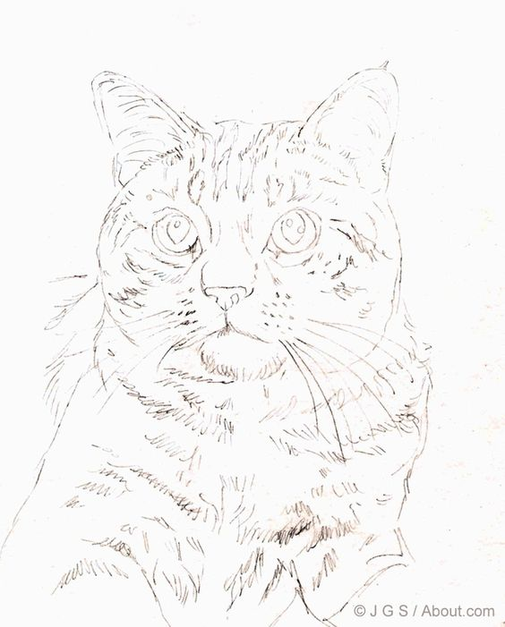 564x701 Draw A Majestic Cat In Colored Pencil Cat Colors, Colored