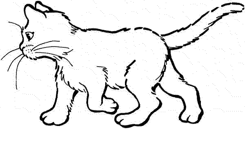 Realistic Cat Drawing at GetDrawings.com | Free for personal use ...