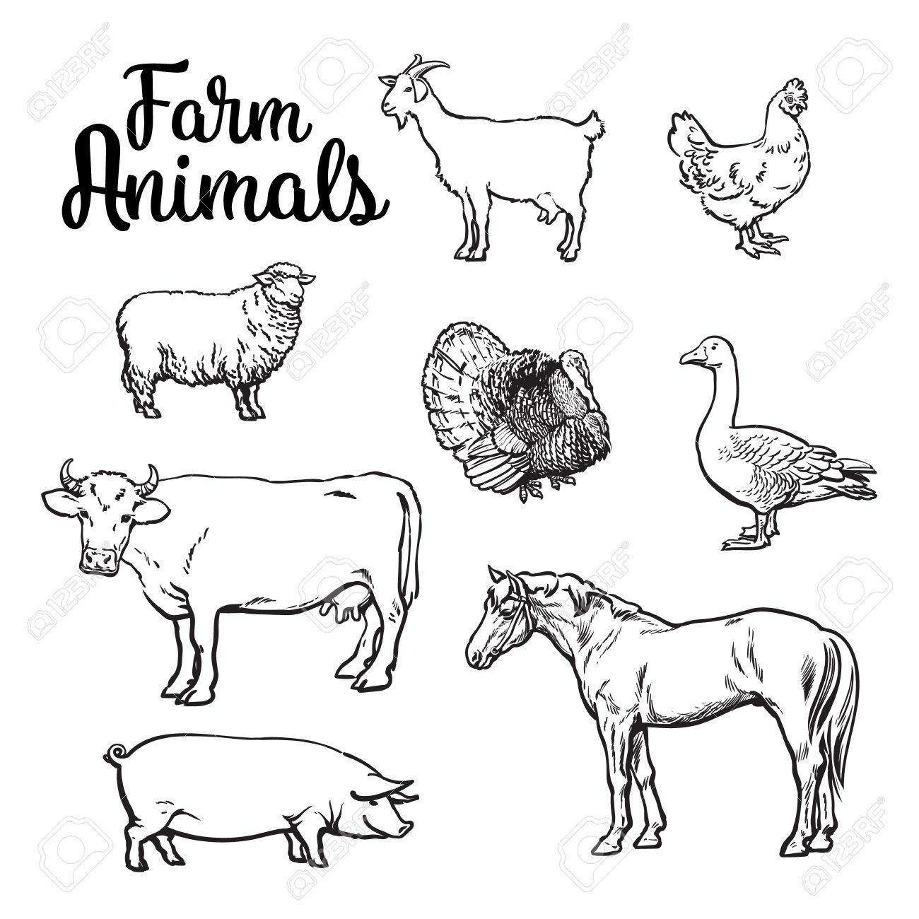 1300x1300 Farm Animals, Cow, Pig, Chicken, Goose, Poultry, Livestock, Color