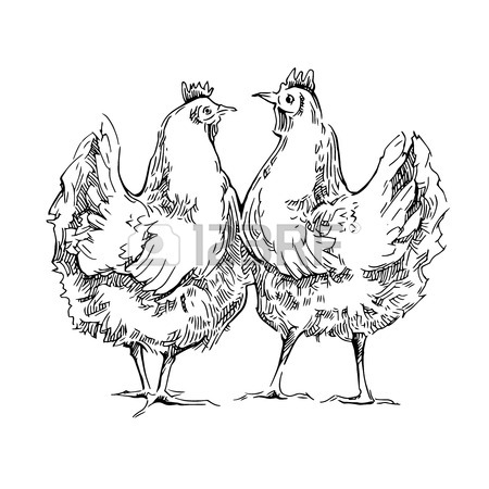450x450 Hand Made Sketch Of Chicken. Vector Illustration. Royalty Free