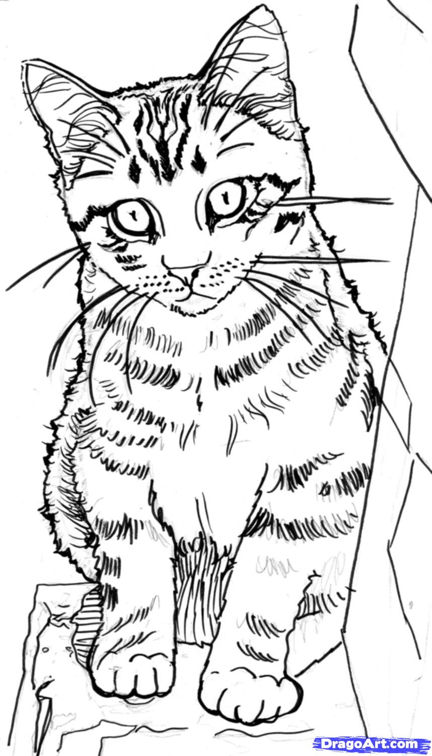 858x1500 Homemade Cat Food Drawing Techniques, September And Sketches