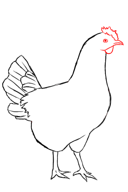450x675 How To Draw A Chicken