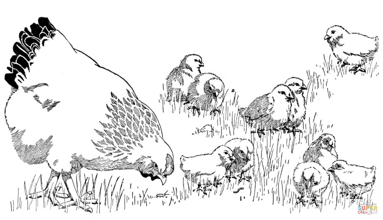 1500x861 Mother Hen And Baby Chicks Coloring Page Free Printable Coloring