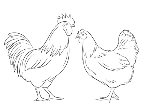 480x359 Rooster And Hen Coloring Page Free Printable Pages