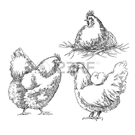 450x450 Chicken And Farm. Vector Illustration In Vintage Style Royalty