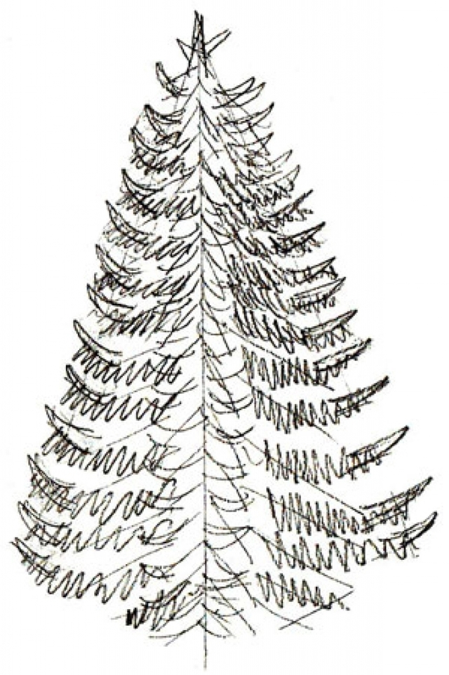 640x962 Realistic Christmas Tree Drawing How To Draw A Christmas Tree Draw