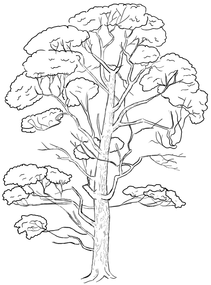 700x947 How To Draw Trees