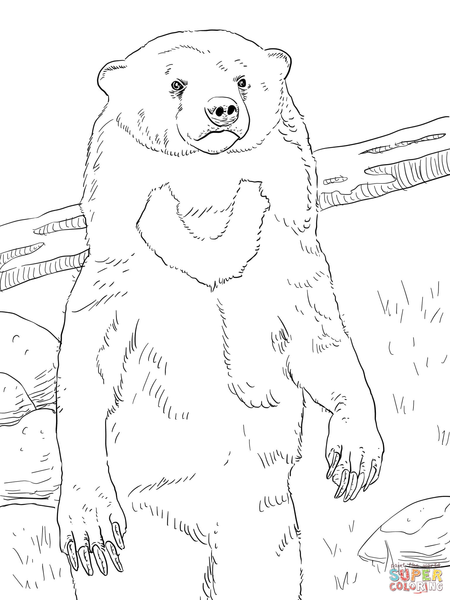 1536x2048 Realistic Sun Bear Coloring Page Free Printable Coloring Pages