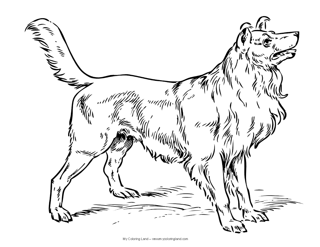 1056x816 Dog Coloring Pages