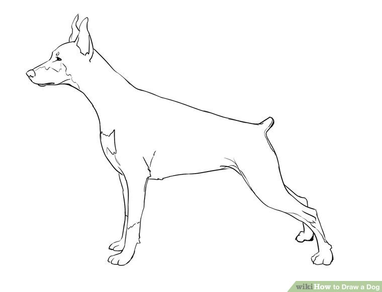760x582 Draw A Dog Dog Steps And Drawings