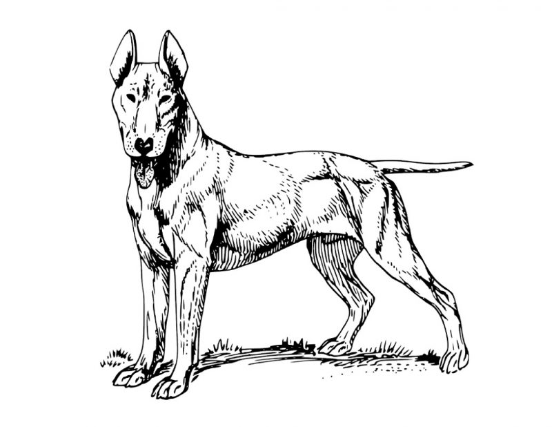 800x618 Free Printable Dog Coloring Pages Learning Printable