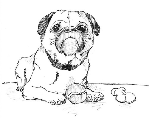 500x398 How To Draw A Dog