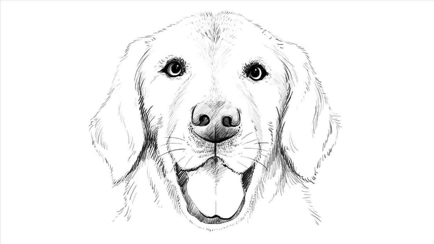 1500x843 The Images Collection Of Hub I Realistic Dog Drawing Challenge You