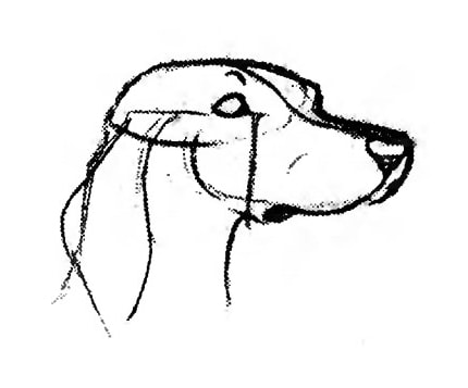 430x357 Draw The Dogs Face Half Turned 5 Min Art Tutorials
