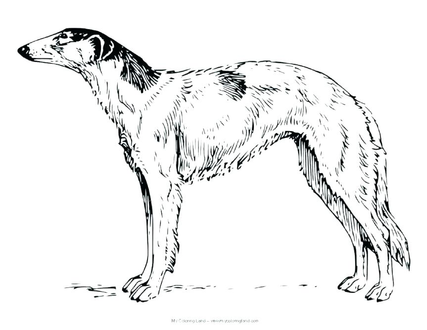 863x667 Complete Realistic Dog Coloring Pages New Harry The Dirty Page