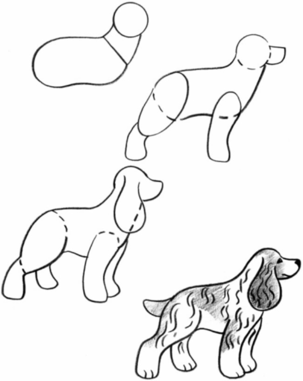 Realistic Dog Drawing Step By Step