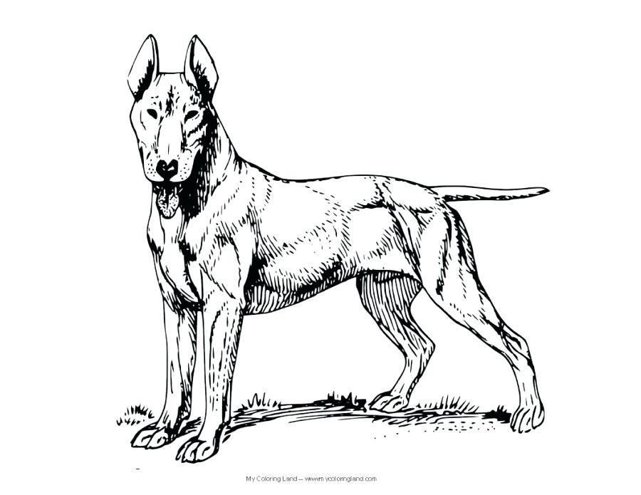 900x695 Incredible Astounding Realistic Dog Coloring Pages Crayola Photo