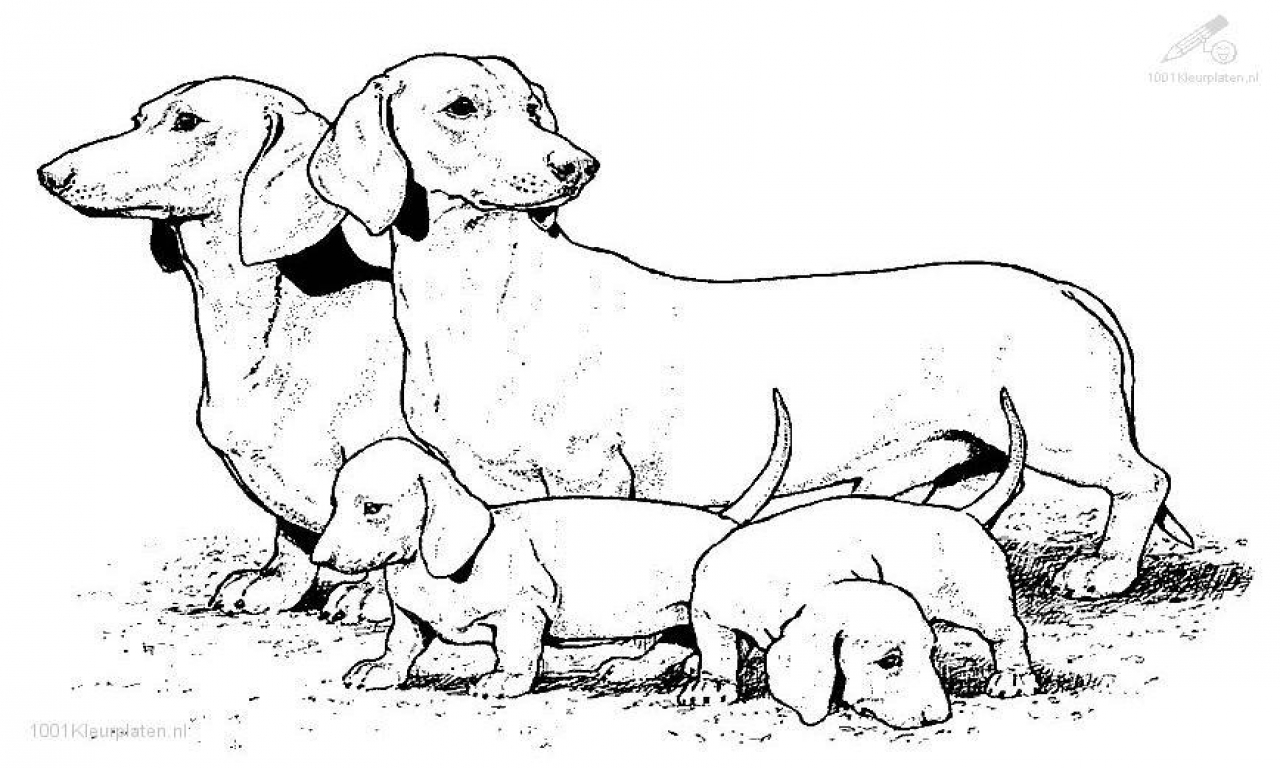 1280x768 Dog Coloring Pages Reaic Animals