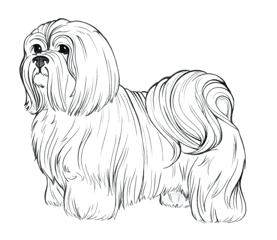 900x779 Realistic Dog Coloring Pages