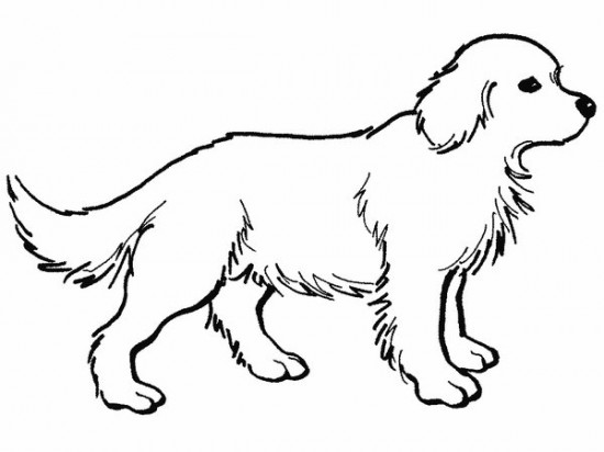 550x412 Realistic Dog Coloring Pages
