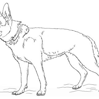 320x320 Tag For How To Draw A Realistic Dog How To Draw A Real Dog Step
