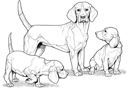 440x300 Dog Color Pages Printable Dog Coloring Pages By Yuckles! Dog