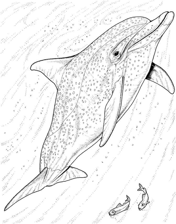 Realistic Dolphin Drawing at GetDrawingscom Free for personal use