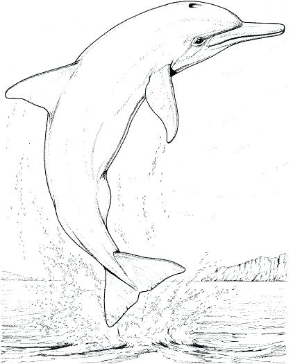 Realistic Dolphin Drawing At Getdrawings Com Free For Personal Use