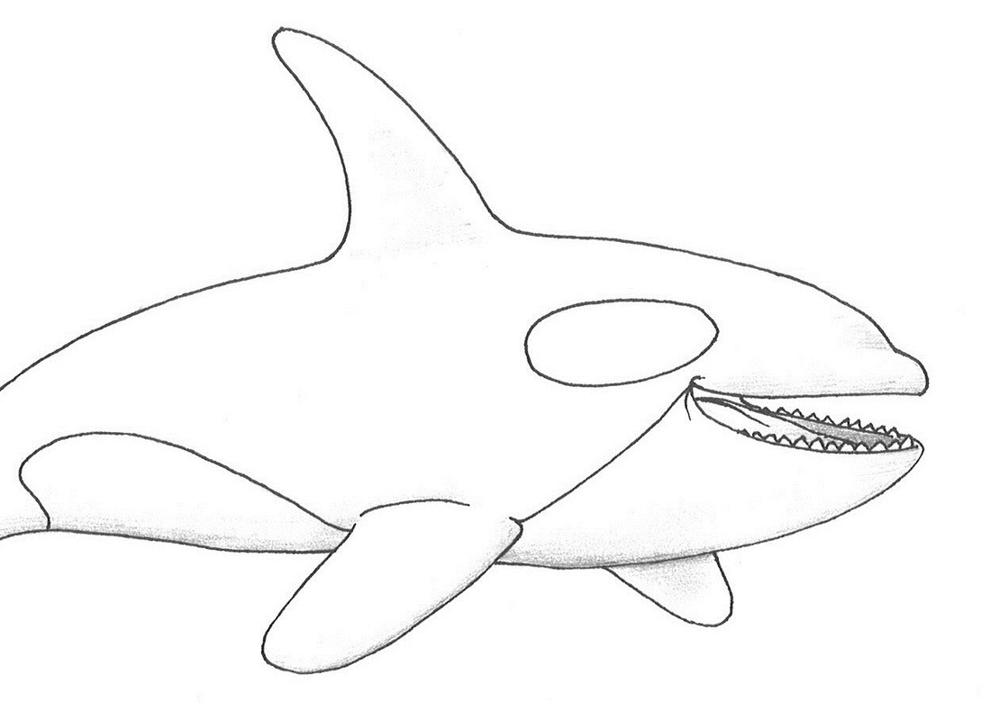 Realistic Dolphin Drawing at GetDrawings.com | Free for ...