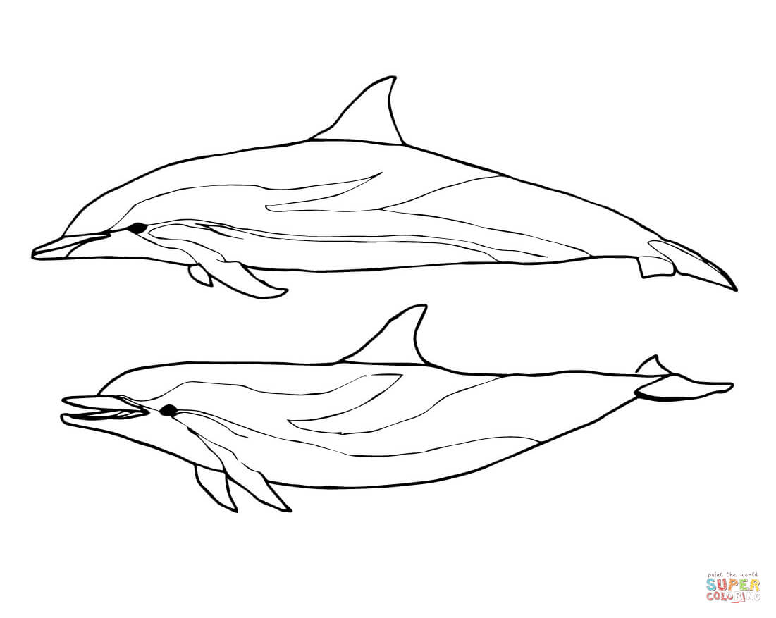 1101x877 Coloring Pages Glamorous Draw A Dolphin Two