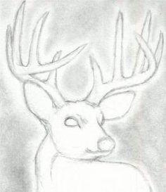 236x273 How To Draw A Deer Head, Buck, Dear Head, Step By Step, Realistic