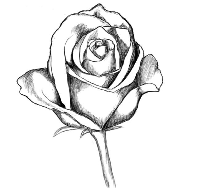 666x615 Pin By Shawna Platt On Tats Tatting