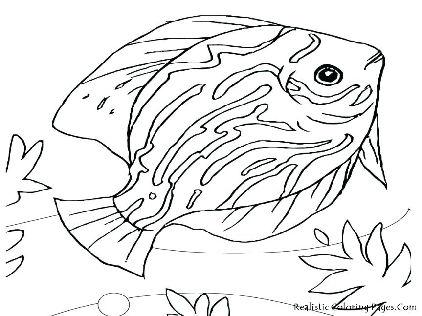 863x647 Ocean Animal Coloring Pages Coloring Pages Ocean Animal Drawings