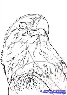 236x333 Bald Eagle Sketches Home Original Artwork Eagle Head Study