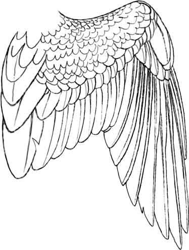 374x495 Bird Wing Drawing Eagle, Hawks Amp Owls Birds And Shiny