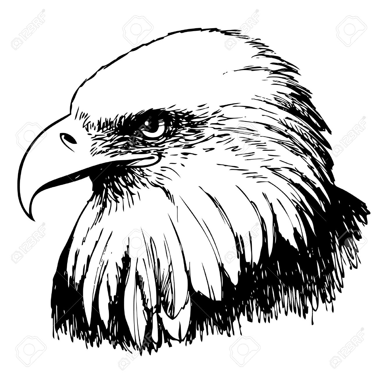 1300x1300 Black And White Eagle Hand Drawn On White Background Royalty Free