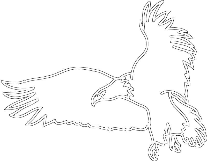 800x622 Drawn Bald Eagle Soaring Eagle