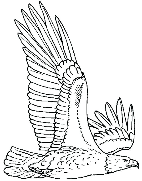 600x767 Eagle Coloring Sheet Coloring Pages Eagles Pin Drawn Bald Eagle
