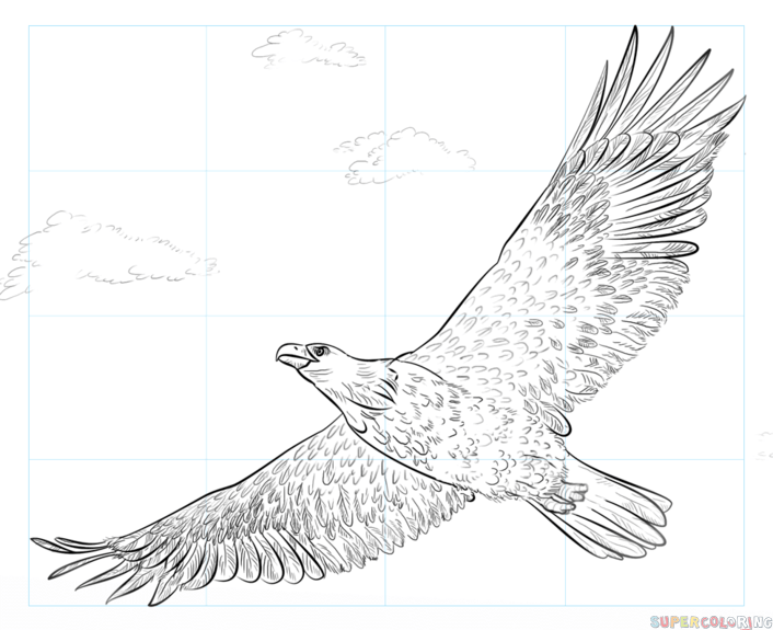 706x575 How To Draw A Bald Eagle Step By Step Drawing Tutorials